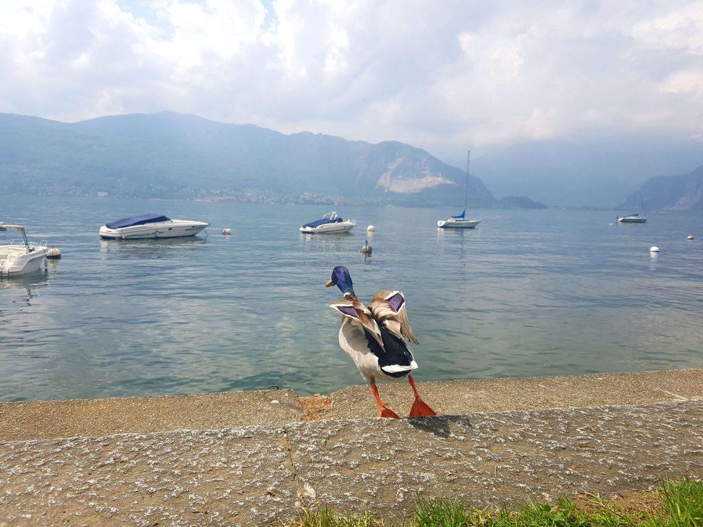vivre en italie expatriation