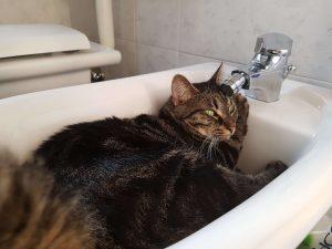 chat dans le bidet italie