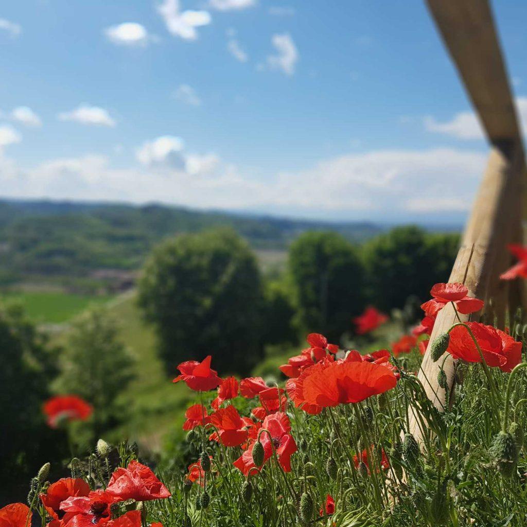 Montferrato Piemont : Coquelicots