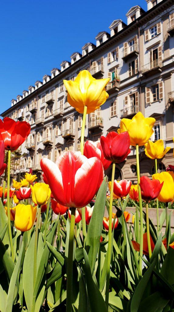 Tulipe centre ville turin