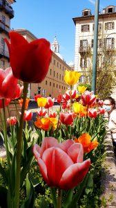 printemps confiné à Turin