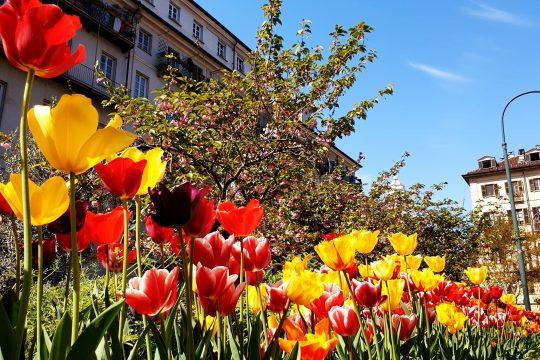 fleurs dans le centre de Turin