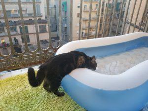 chat qui boit dans une piscine