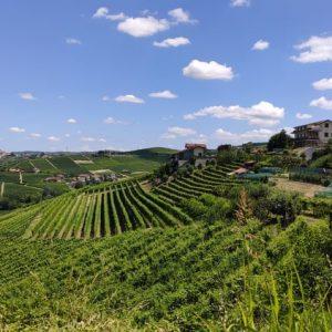 Barbaresco vue sur les vignes