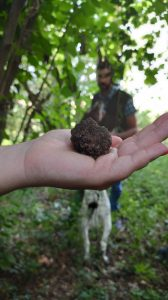 recherche de truffe noir barbaresco
