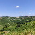 vue sur les vignes des Langhe