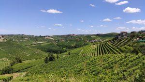 Vigne région Langhe Roero