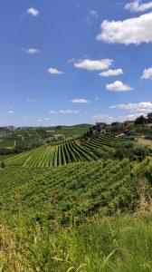 paysages vignes dans les Langhe