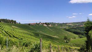 vue sur les vignes Langhe Roero