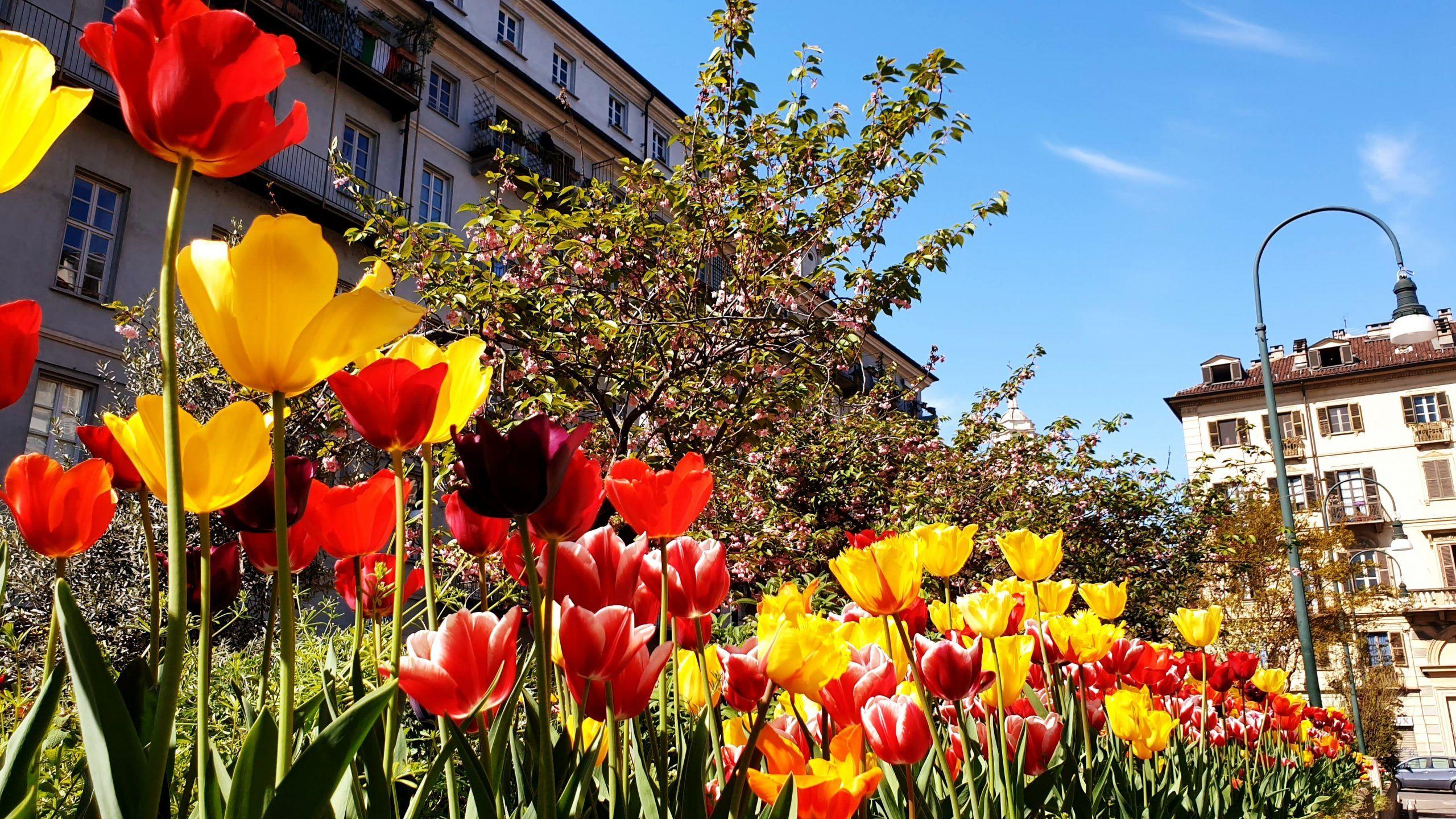 Le printemps 2020 à Turin